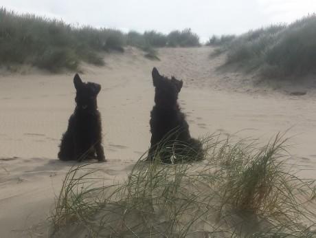 Gwenda und Yuki am Strand
