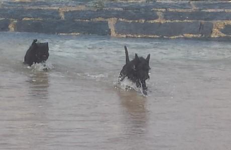 Gwenda und Yuki im Meer