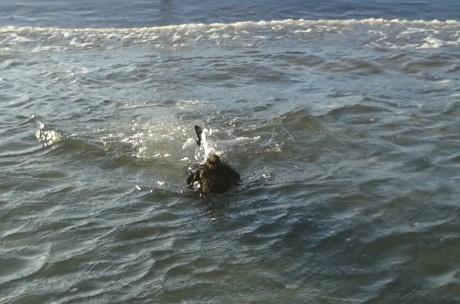 Magnus schwimmt