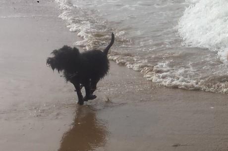 Yuki im Meer2
