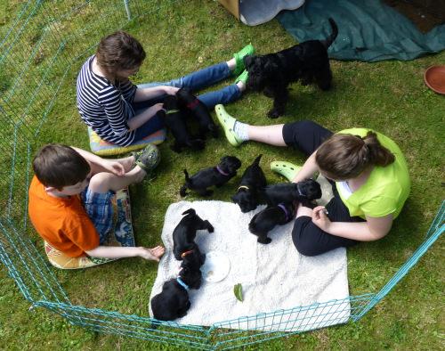 Kinder und Hunde haben im Garten ihren Spaß. Foto vom 30.5.2014