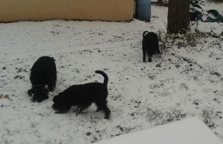 garten schnee 2